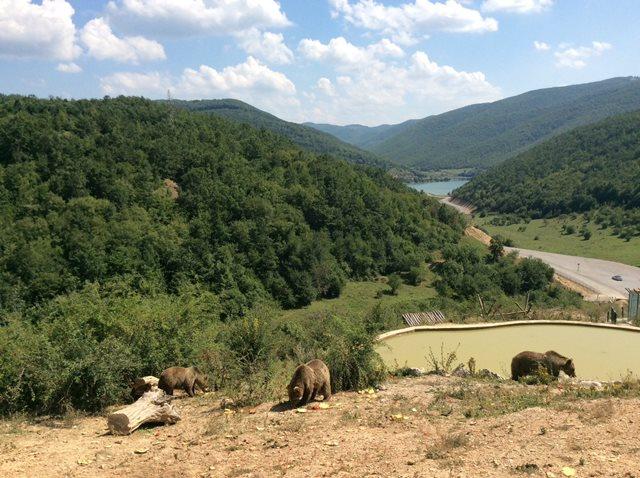 Bear Sanctuary Pristina Kosovo